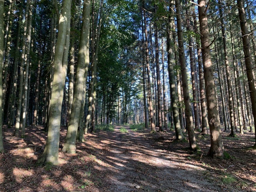 Waldbaden - Holz und die Nähe zur Natur
